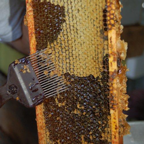 Эффективное лечение суставов подмором пчел